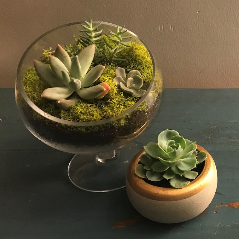 Gathersucculents